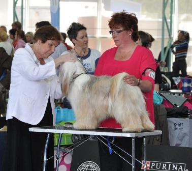 world_dog_show_judging_on_the_tablea